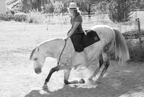halsringe für pferde